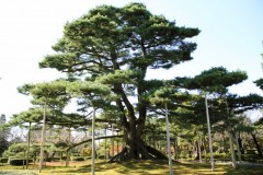 Giardino Kenrokuen 2