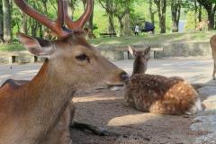 deer-3725744_640