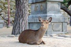 deer-3970148_640